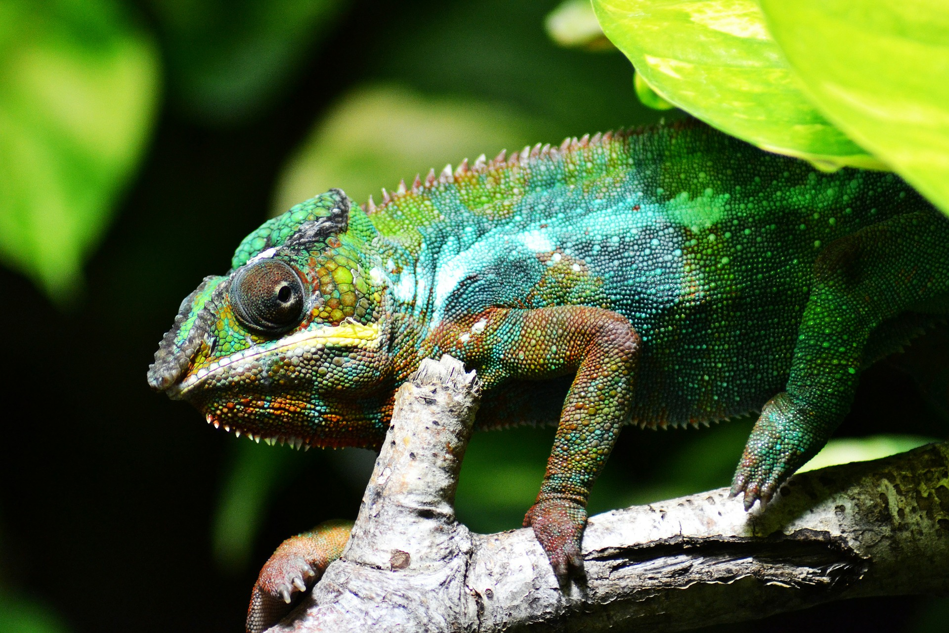 The Corporate Chameleon